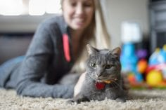 Grey cat relaxing on carpet wearing collar and id being pet by a woman