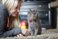 Grey cat sitting on carpet wearing collar and id being pet by woman