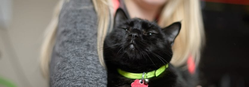 Happy relaxed black cat wearing a collar and id being held by woman