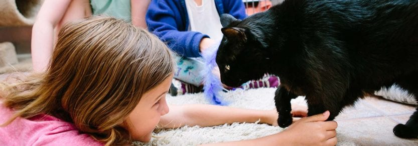 Group of kids playing with a black cat
