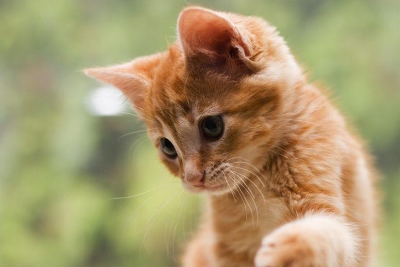 Pet Care And Behaviour Help Topics Bc Spca