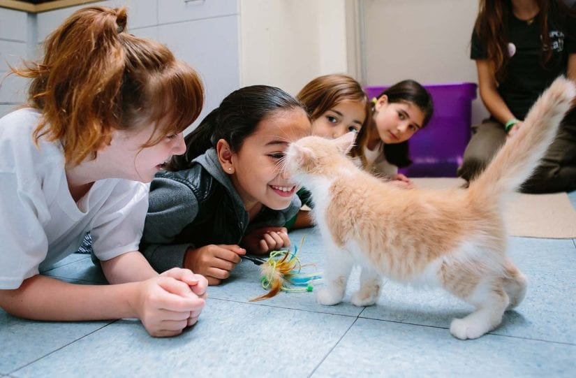 Young kitten kissing a young girl with three other young kids