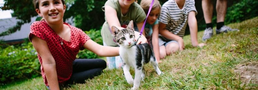 Group of young kids petting and playing with cat walking on a leash