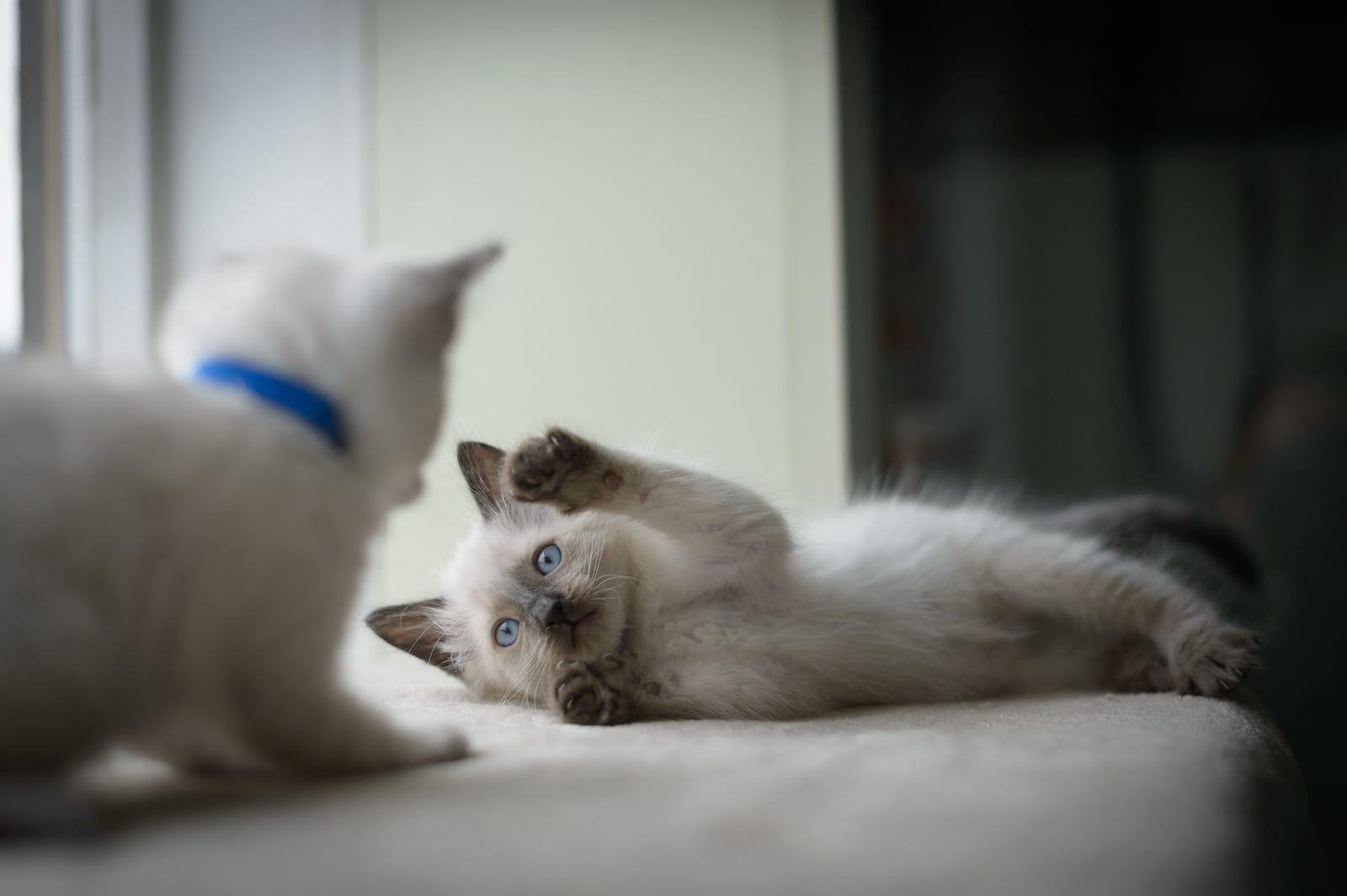 General - In Honour - Tribute - kittens