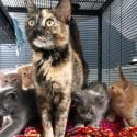 Cat with litter of kittens spay and neuter