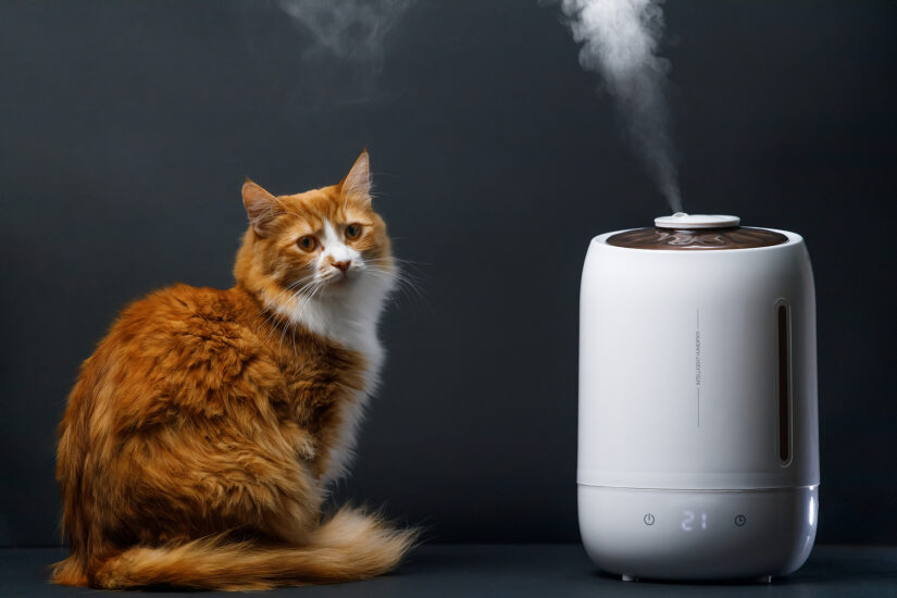 Aroma oil diffusers can be dangerous for pets