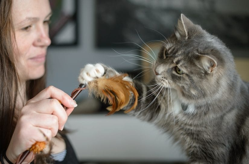 Cat playing with woman with wand toy