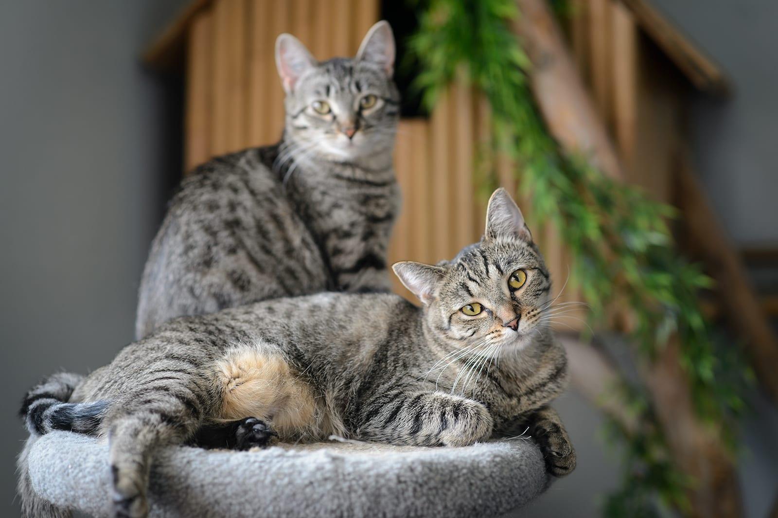 high end cat litter boxes