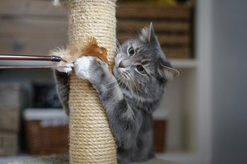 Cat using scratching post and playing with a wand toy