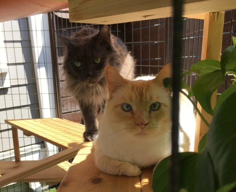 cats in catio outside