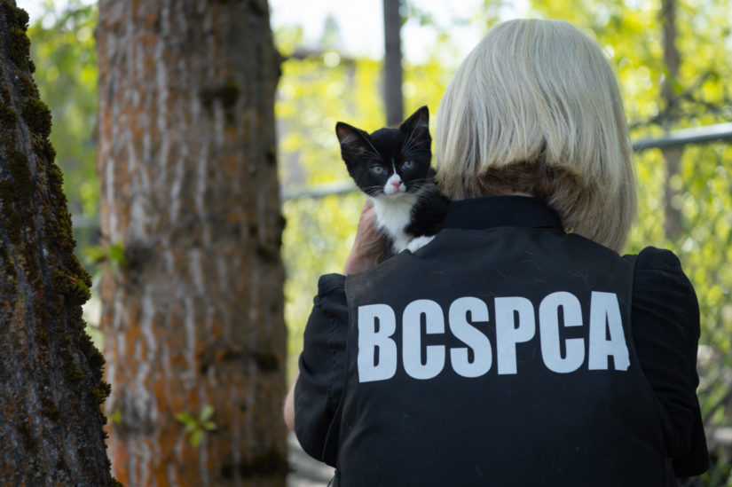 animal cruelty officer holding young cat