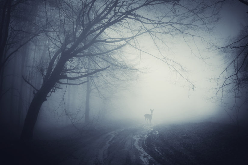 Deer in thick fog in a dark road at night