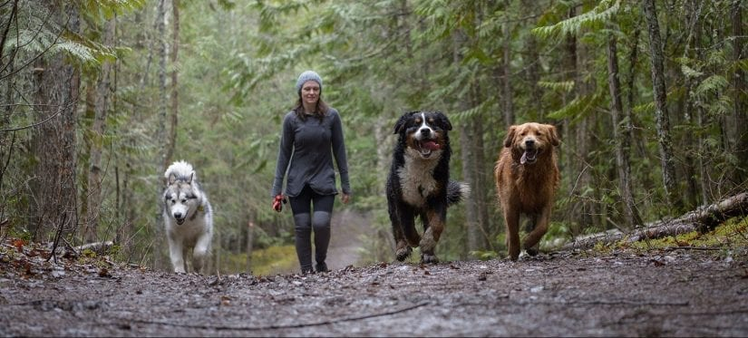 Three energized happy dogs running a forest trail off leash with a woman