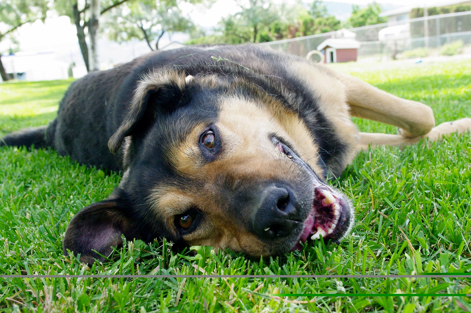 Playful smiling happy dog lying on side on the grass