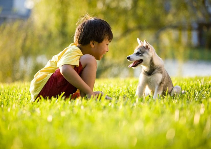 Boy playing with puppy sitting on grass