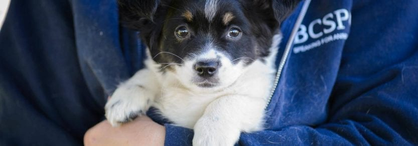 Cute puppy dog being held by person with paws over arm