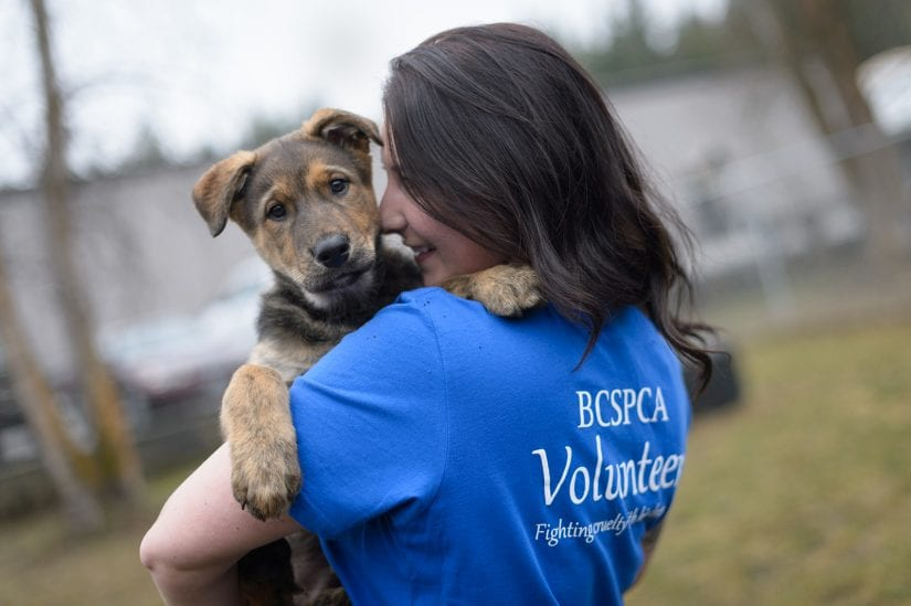 Curious puppy dog being held and cuddled and looking over shoulder of BC SPCA volunteer