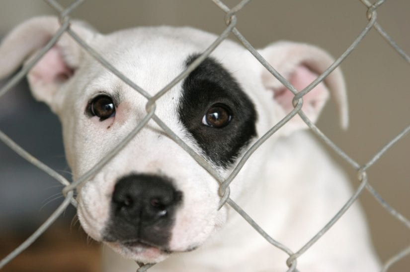 Puppy dog looking sad behind a gate cage