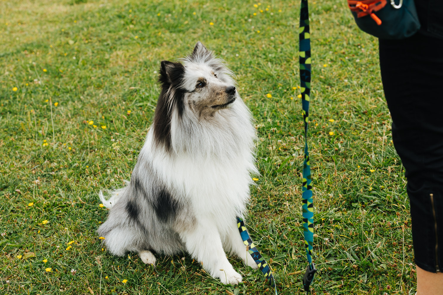 dog sitting waits for treat from trainer