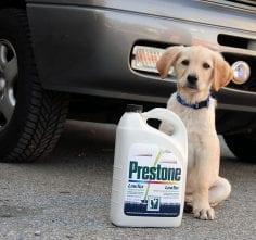 Is antifreeze harmful to animals?