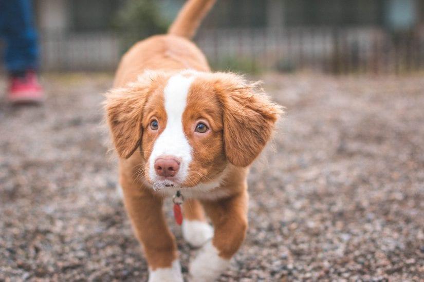 Pet identification registry   BC SPCA
