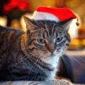 Santa Cat Christmas ecard