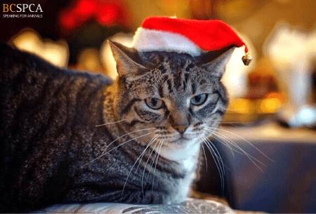 Santa Cat ecard