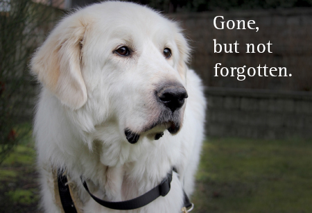 General - In Memory - Tribute dog