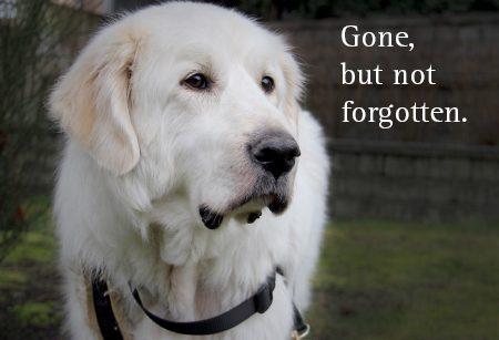 In Memory dog ecard