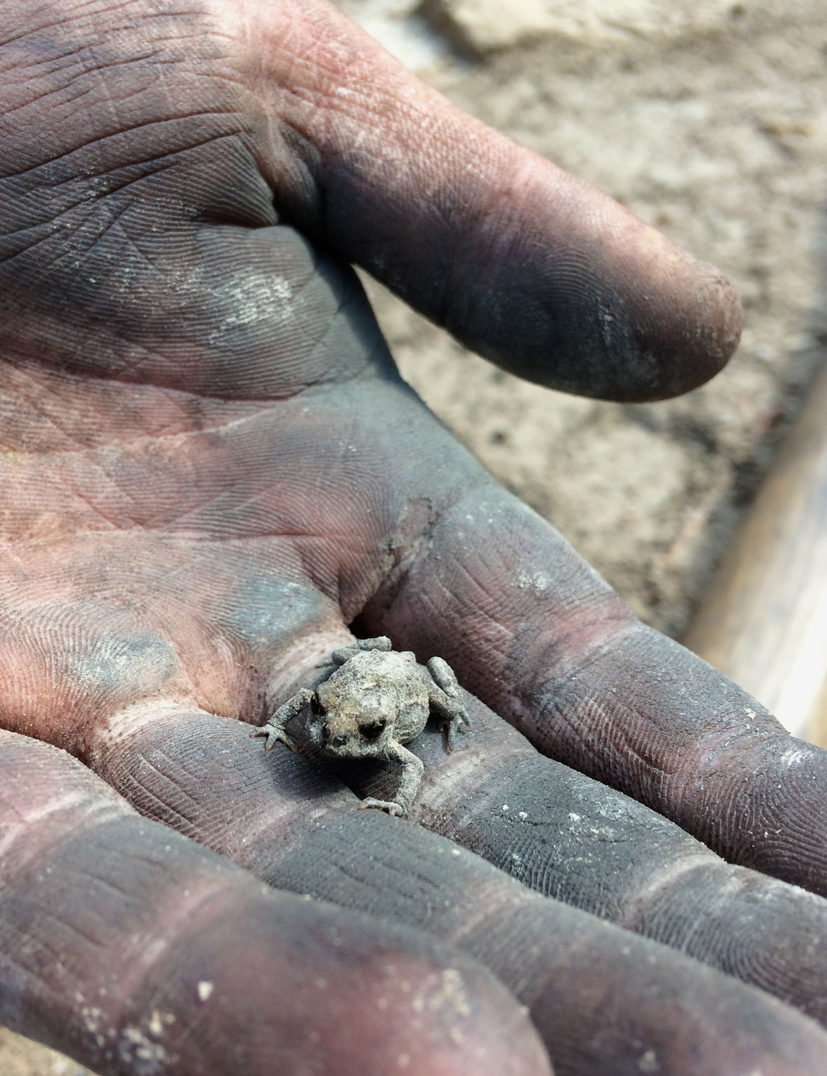 Frog covered in ash in hands of firefighters