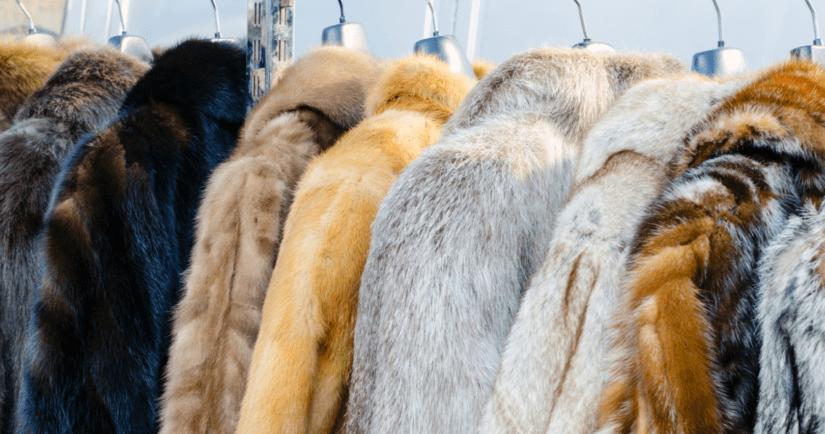 Fur coats hanging on a rack