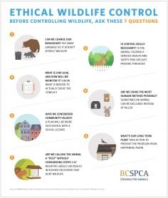 7 questions to ask before wildlife control