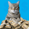 BC SPCA Lottery for Animals Cat Image