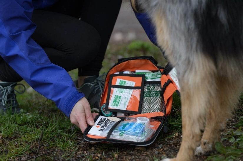 Merch shot of woman's hands and open pet first aid kit with dog nearby