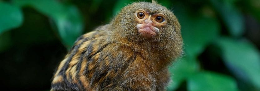 Exotic animals help topics | BC SPCA