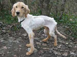 Maple Ridge Dog Rescue