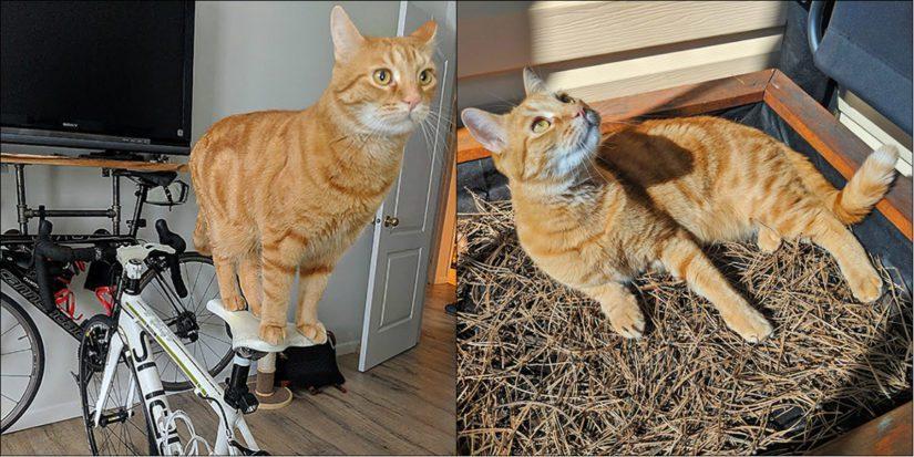 Milo the cat
