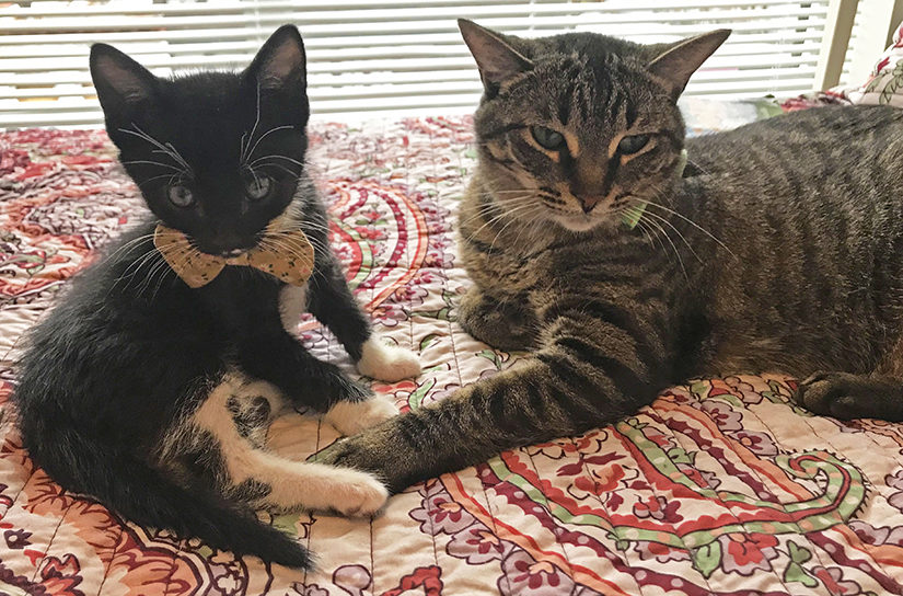 Leo and Sylvester