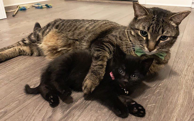 Leo and kitten