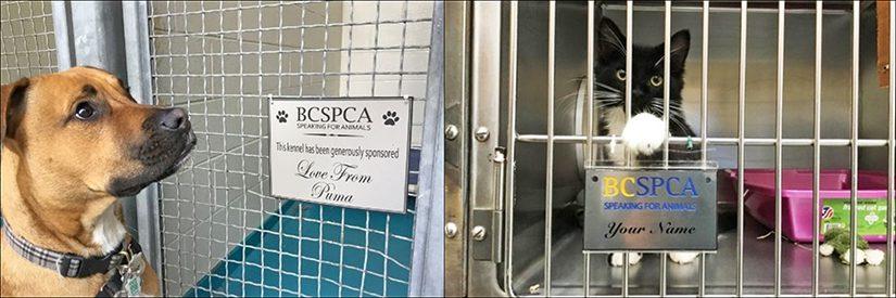 adopt a kennel