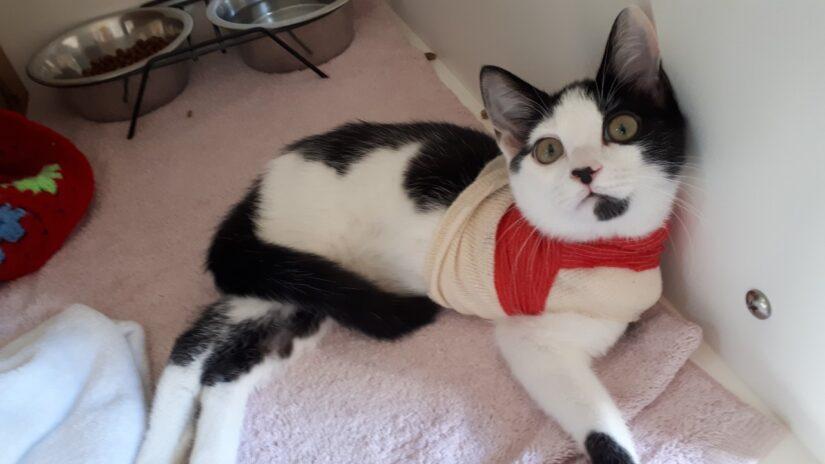 jersey the kitten