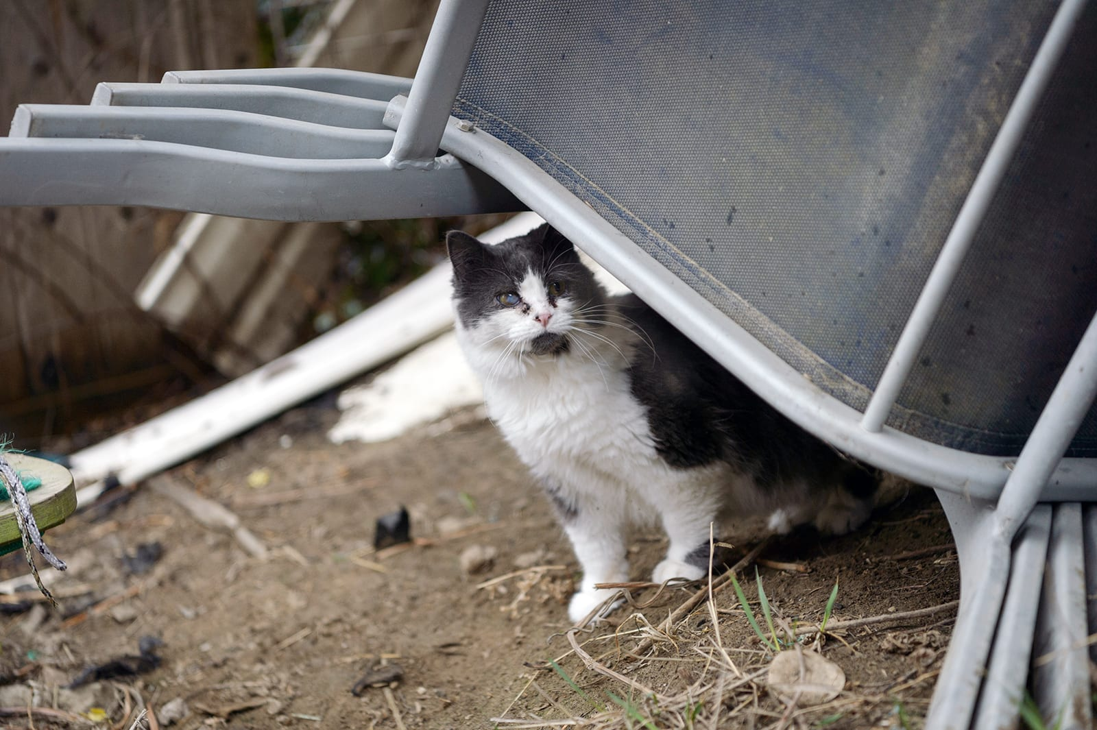 Laws About Make A Lost Cat Your Own