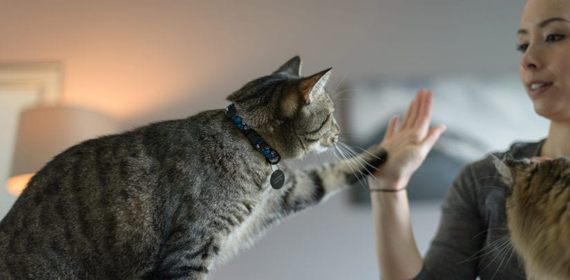 Cat high fiving woman