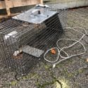 A dangerous home-made raccoon trap