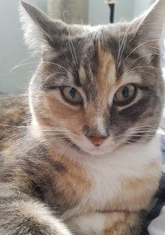 beautiful cat found in dumpster