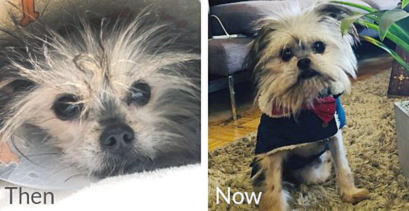 Noel the dog, before and after treatment