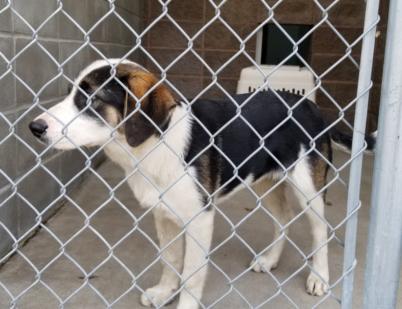 Dog in cage in North Vernon