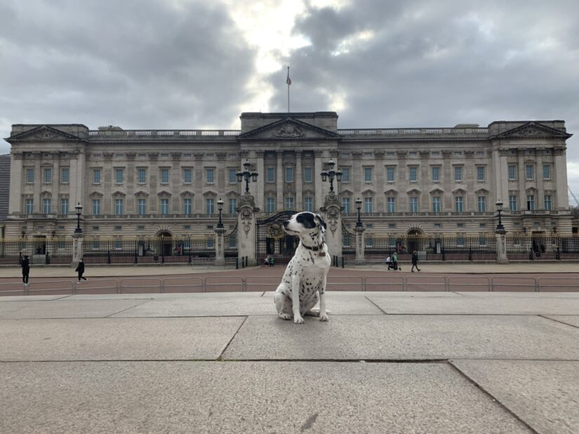 Tika at Buckingham Palace
