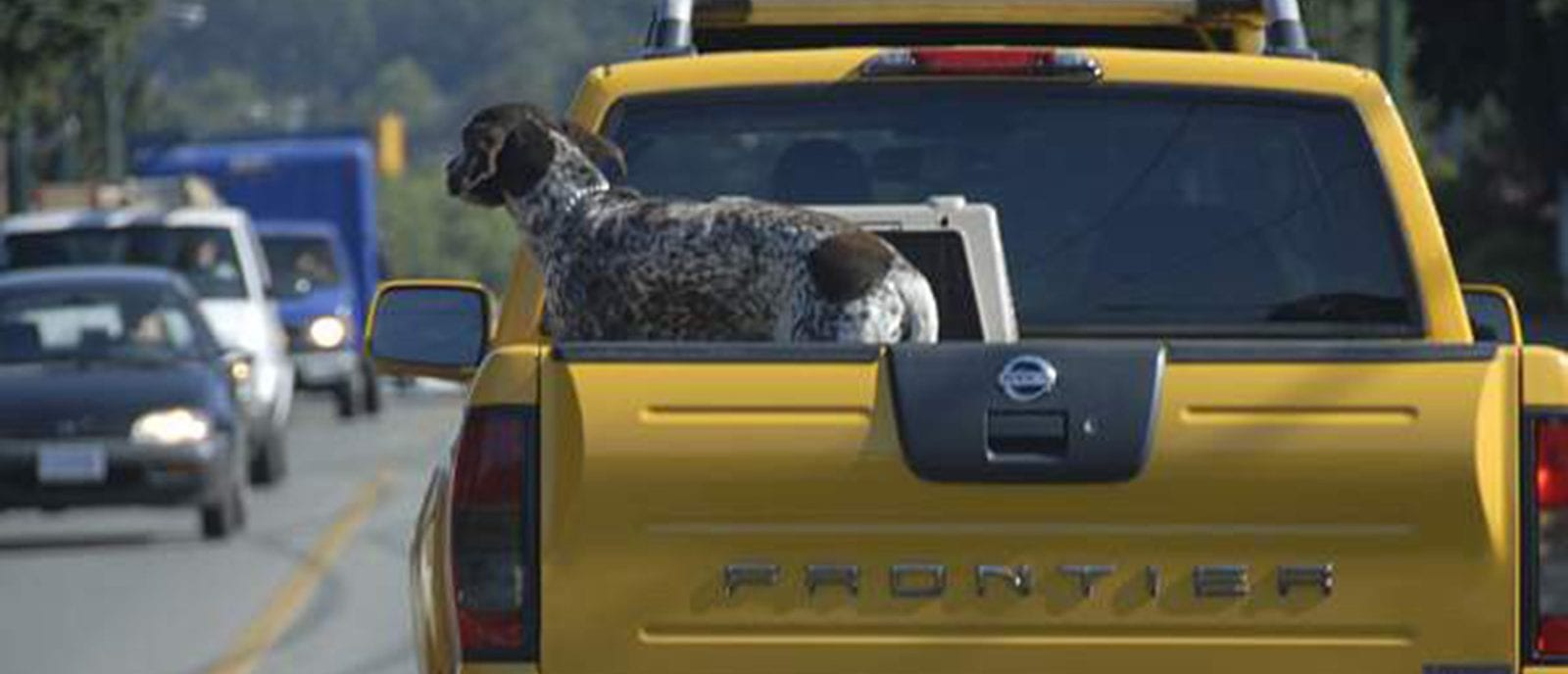 transporting dogs in truck bed