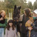 horse, cruelty, maple ridge